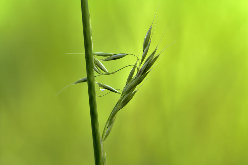 With mindfulness, one can find such beautiful views in nature. A grassy ear unfolds and the water droplet reflects the surroundings. Plant Green Color Close-up Growth Beauty In Nature Nature Focus On Foreground Day No People Invertebrate Plant Stem Selective Focus Outdoors Insect Grass Blade Of Grass Symbol Mindfulness Natural Beauty Nature Art Grass Art EyeEm Nature Lover Scenics - Nature Nature Nature Photography Nikon Still Life Water Drop EyeEm Selects Makro Environment Meadow Ecology Outdoor Photography Biology