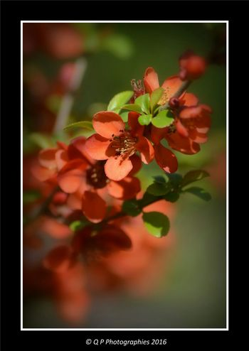 Nature On Your Doorstep Flower Photography Flower Collection Flowers, Nature And Beauty Nature_collection Close Up Flower Macro Nature Fleurs
