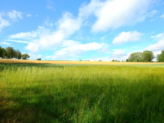 Agriculture Beauty In Nature Cloud - Sky Day Environment Field Grass Green Color Growth Land Landscape Nature No People Outdoors Plant Rural Scene Scenics - Nature Sky Tranquil Scene Tranquility Tree