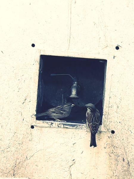 Loves Animals Nature EyeEm Nature Lover EyeEm Birds Biirds Water Natulareza City Urban Scene