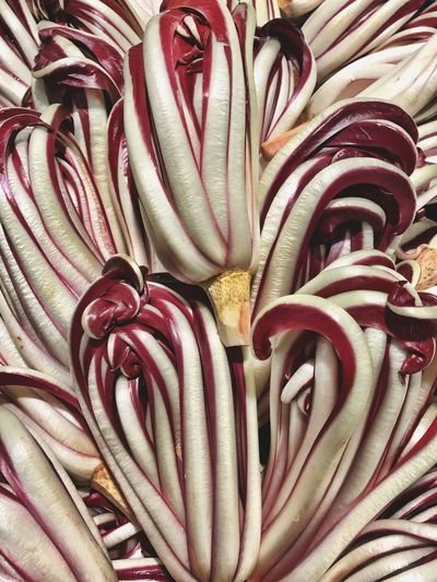 Radicchio Radicchio Rosso Treviso Radicchiorosso Vegetable Vegetables Red Veneto Italy Market Full Frame No People Backgrounds Indoors  Close-up Freshness Shotoniphone7 IPhoneography High Angle View Delicacy Foodporn Food Freshness Lettuce Chicory Visual Feast