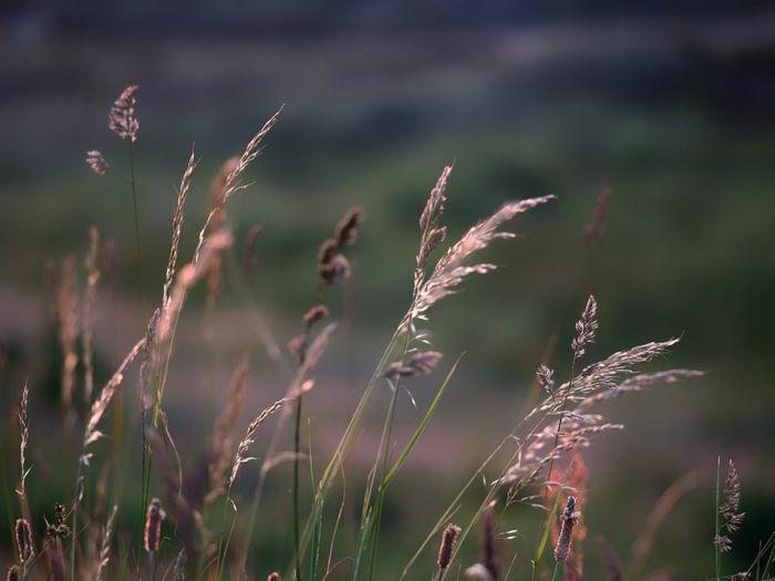 Close-up of fresh grass