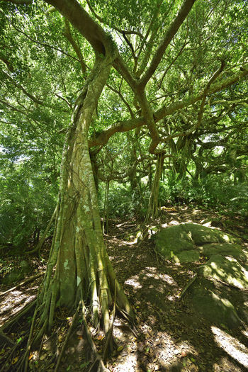 Beauty In Nature Branch Day Forest Growth Nature No People Outdoors Tranquility Tree 台東 台灣 壯觀 巨木 成長 氧 綠色 芬多精 葉子