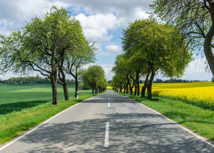 empty road or avenue with trees during springtime Plant Tree Road The Way Forward Direction Diminishing Perspective Transportation Growth No People Sky Nature Road Marking Green Color Beauty In Nature Symbol Marking Day vanishing point Treelined Dividing Line Tranquility Outdoors Sign