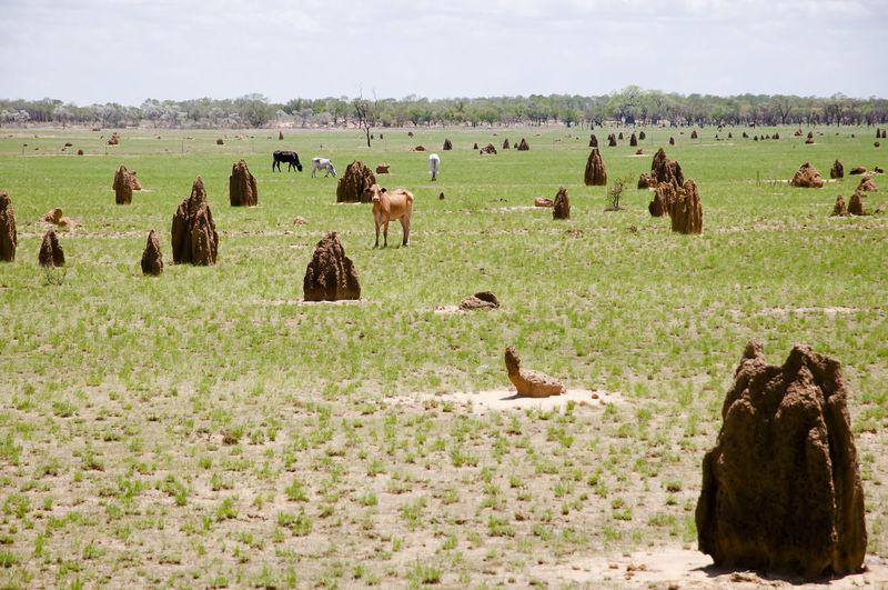 Termite Mounds - Kimberley - Australia Ant Hill Australia Kimberley Termite Termite Mound