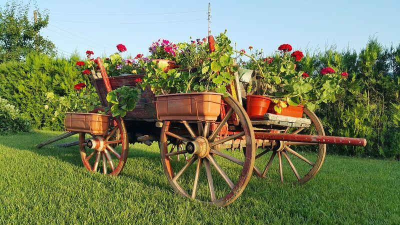 Garden Flowers Colors Beatiful Wooden Cart