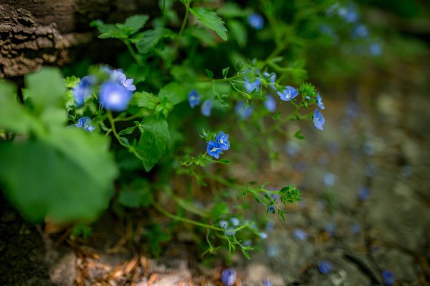 Beauty In Nature Close-up Day Flower Flower Head Flowering Plant Fragility Freshness Green Color Growth High Angle View Leaf Nature No People Outdoors Plant Plant Part Purple RainDrop Selective Focus Vulnerability  Water