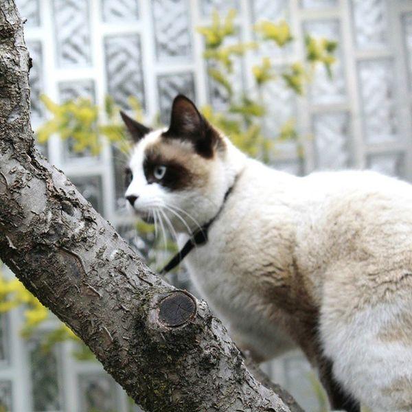 Hiding beauty revealed: Super cute panda-cat 😊😊😊