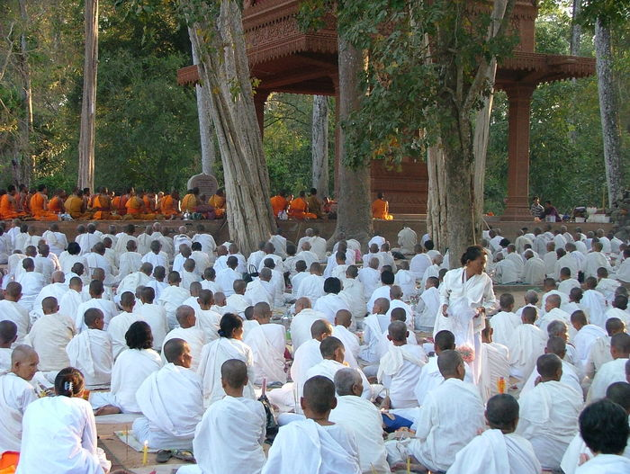 Asia. Buddist Monks. Buddist. Colour Day Large Group Of People Many Buddist Monks. Many. Men Orange Outdoors Park - Man Made Space Rear View Religeon Robes. Sitting Togetherness Tree White White Robes