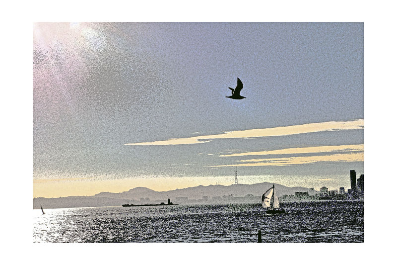 Sailing Middle Harbor 4 Port Of Oakland, Ca San Francisco Bay Abstract Fresco Effect Hard Light Reflected On The Water Sailboats Freighter Sutro Tower AT&T Park Cityscape Hills Of San Francisco SEAGULL IN FLIGHT Water Silhouette Clouds And Sky Embarcadero Cove Creative Perspective From My Point Of View