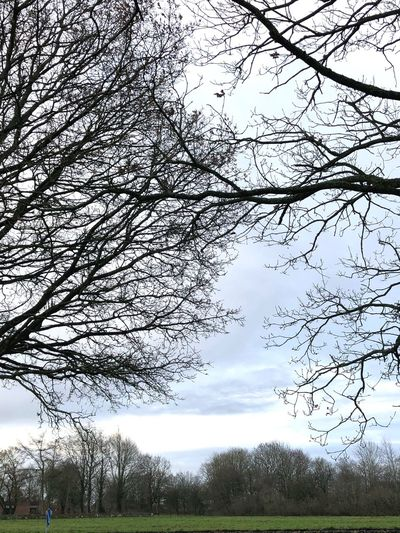 Skyscape Skyscapes Sky_collection Decembersky Beautiful Sky❤ Decemberweather Cold Day Tree Sky Cloud - Sky Nature Beauty In Nature Bare Tree