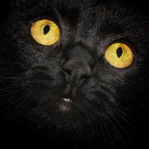 GoldenEye Cats