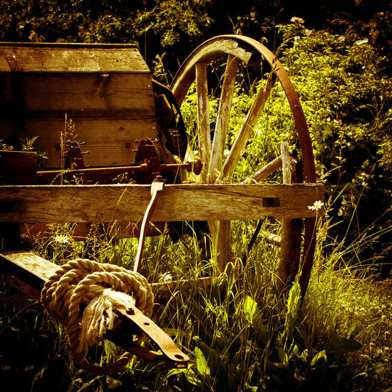 Cart With Rope Country Cart Countryside Daisy English Scene Old Cart Sunshine Wood Wooden Cart