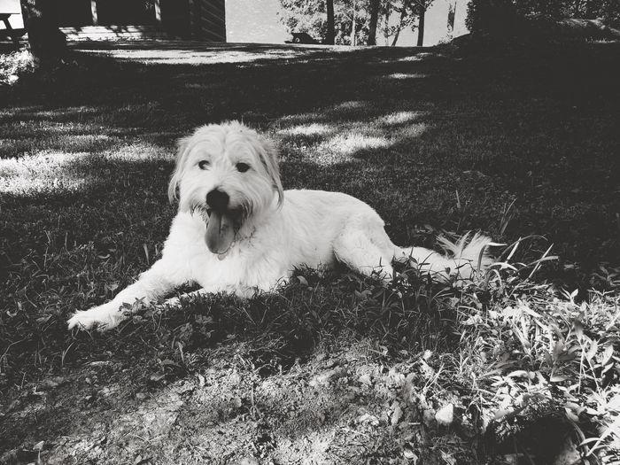 Mayhem Blackandwhite Monochrome IPhoneography Dog Canine Pets One Animal Domestic Mammal Domestic Animals Relaxation