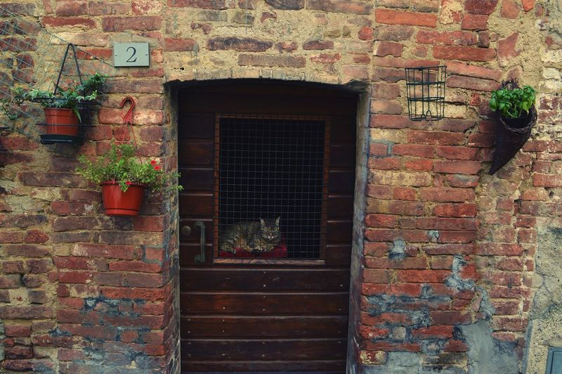 A cat in Siena Window House Wall - Building Feature Building Exterior Bricks Cat Doors Funny Siena Italy TakeoverContrast