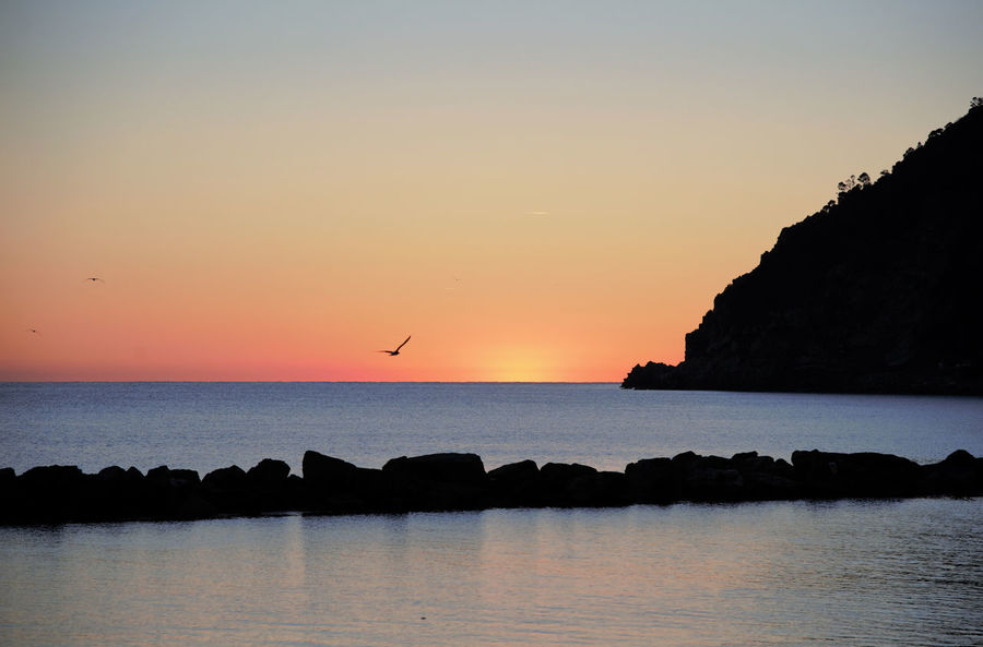 Sunset Sea Animal Wildlife Bird Flying Tranquility Water Animal Themes Beauty In Nature Scenics Nature Seascape Bird Photography Birds_collection Birds In Flight Sunset Silhouettes Relaxation Moneglia Italy Photos Animals In The Wild Flight Wings Flightless Bird Flight Sun_collection Cloud - Sky