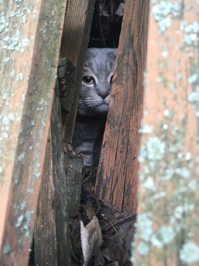 Despair Melancholy Cat♡ Cats Cat No People Day Wood - Material Animal Themes Tree Trunk Animal Trunk Close-up Animal Wildlife Animals In The Wild Outdoors