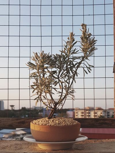 Close-up of potted plant on table against sky