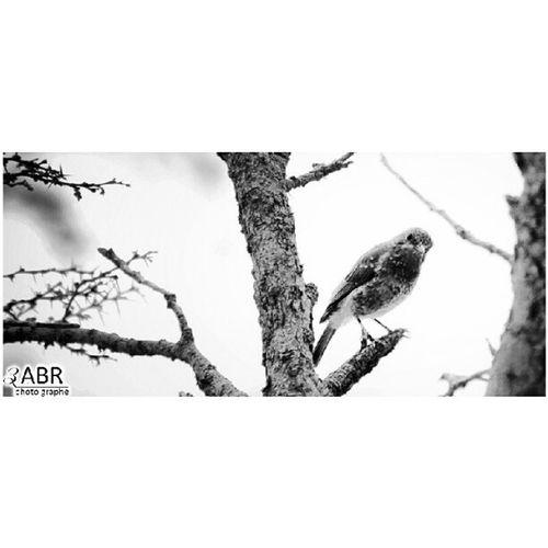طير ملون ابها المملكة السعودية الكويت البحرين الامارات عمان قطر Tree Park Mountains clouds Sawdah Abha Saudi Arabia, Kuwait Bahrain Emirates Oman Qatar x3abrr 50d Canon zoom