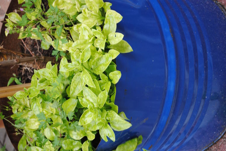 Blue Close Up Closeupphotography Detail Low Angle View Plant Potted Plant