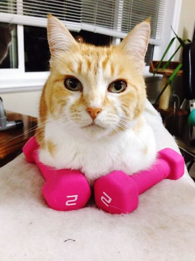 It's workout time with Treasure 💪 Cat♡ Amature Photography Eyes Are Soul Reflection Smile ✌ Weightlifting ♥ Fitisfun