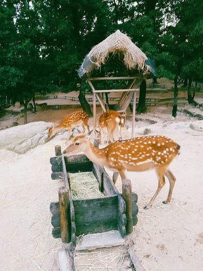 Three deers eating at feeder