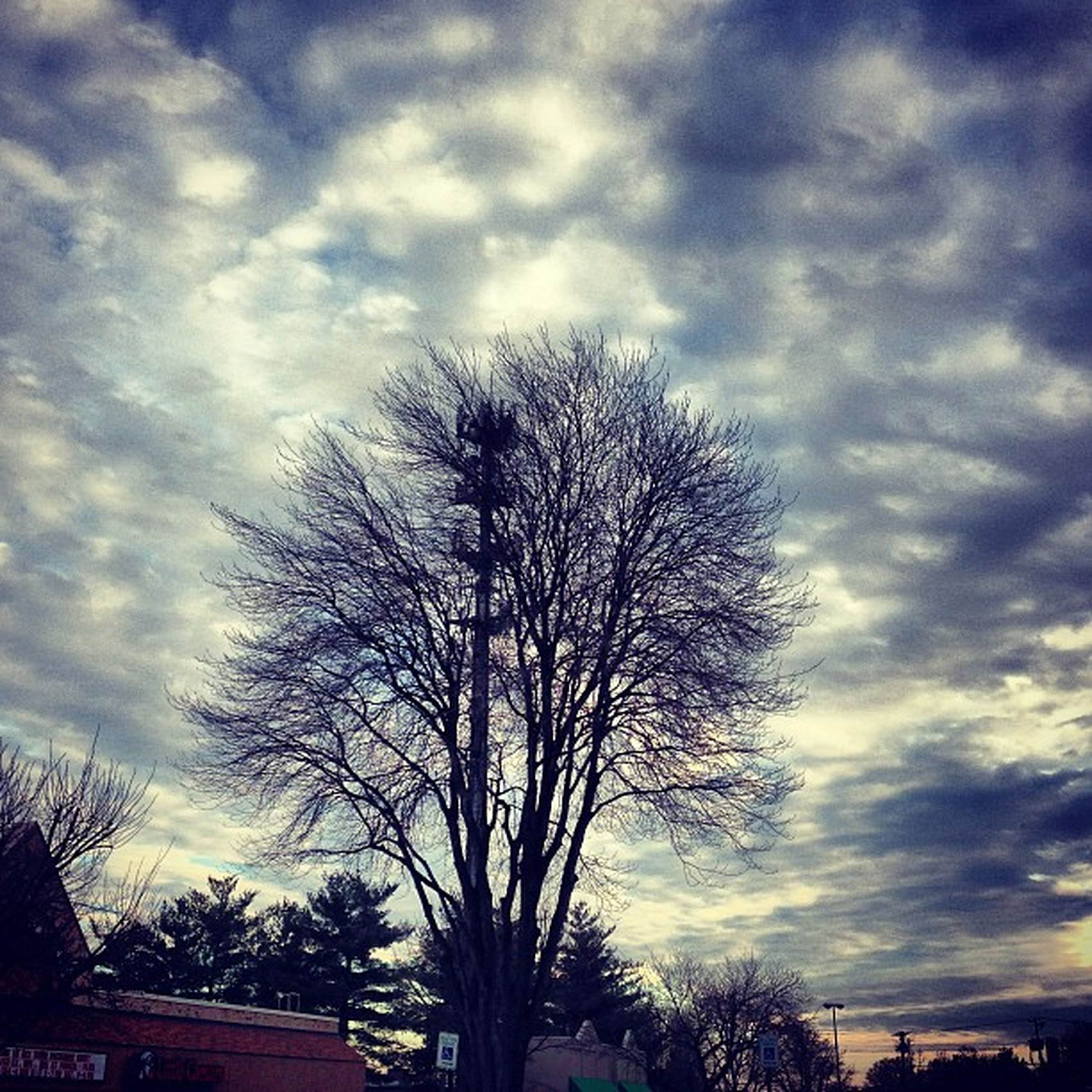 tree, sky, silhouette, cloud - sky, low angle view, bare tree, cloudy, tranquility, branch, beauty in nature, nature, cloud, sunset, scenics, tranquil scene, growth, overcast, tree trunk, dusk, outdoors