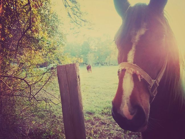 Horse Farm Contry Contry Living Pony First Eyeem Photo