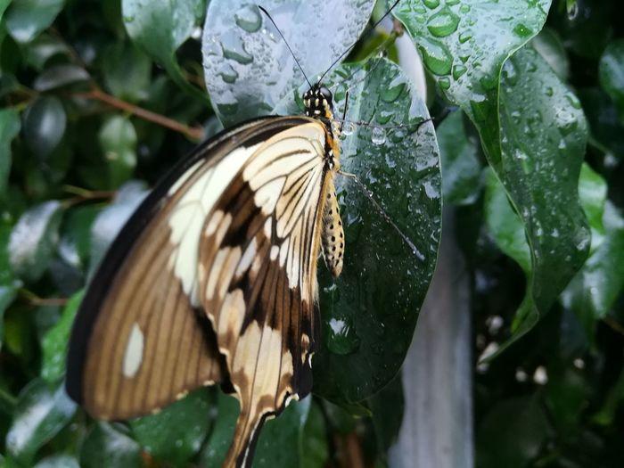 Butterfly Bird