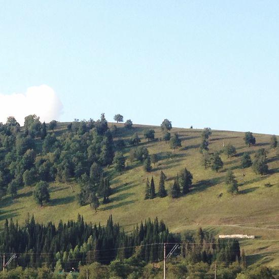 空 山 緑