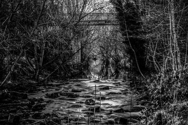 river bridge trees walk rest sky Balck And White Dark Tree Sky Walk Rest River Bridge Time Passing Cloud