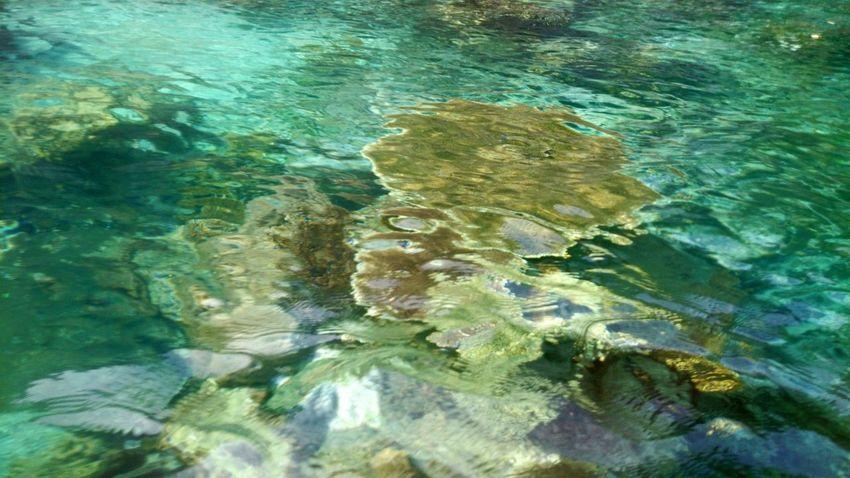 Coralstone Corals Seacreatures