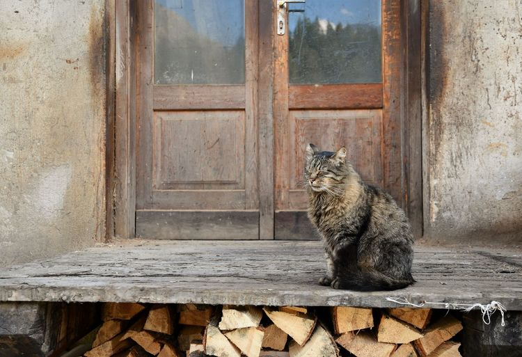 Cat sitting in front of the entry of an old carpentry in a mountain village Autumn colors Calmness Old-fashioned Pile Of Wood Woodpile Animal Animal Themes Cat Closed Eyes Day Domestic Animals Domestic Cat Door Entrance Feline Long Haired Cat Lovely Mischievous No People One Animal Outdoors Pets Sitting Whisker Wood - Material
