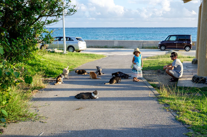 Animal Animal Themes Cat Day Dog Domestic Animals Escapism Friendship Full Length Ishigaki  Japan Mammal One Animal Outdoors Pets Relaxation Running Side View Sitting Togetherness Two Animals Vacations Weekend Activities