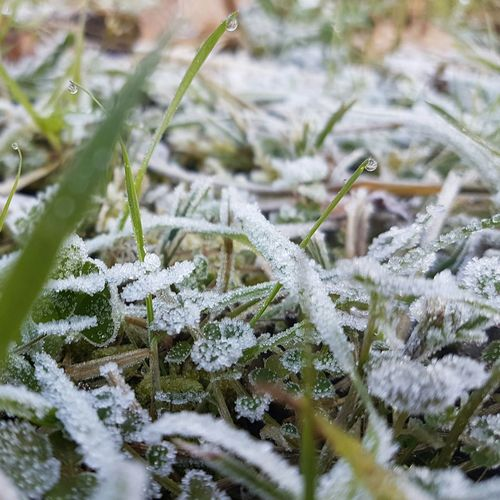 Winter Cold Temperature Nature Snow Close-up Weather Beauty In Nature Growth Outdoors No People Grass Day Nieve Nieve 2016 Naturaleza Rocío