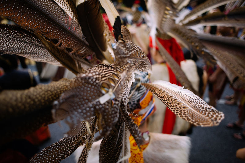 Close-up of man wearing argus feathers headdress during an event