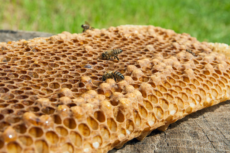 Animal Animal Themes Animal Wildlife Animals In The Wild APIculture Beauty In Nature Bee Beehive Close-up Day Food Food And Drink Honeycomb Natural Pattern Nature No People Outdoors Pattern Selective Focus Textured