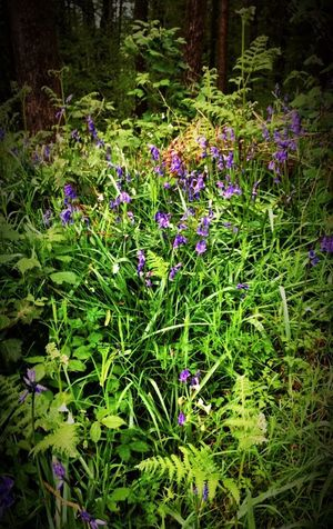 Purple Growth Nature Flower Beauty In Nature Plant No People Outdoors Day Forest Freshness Fragility