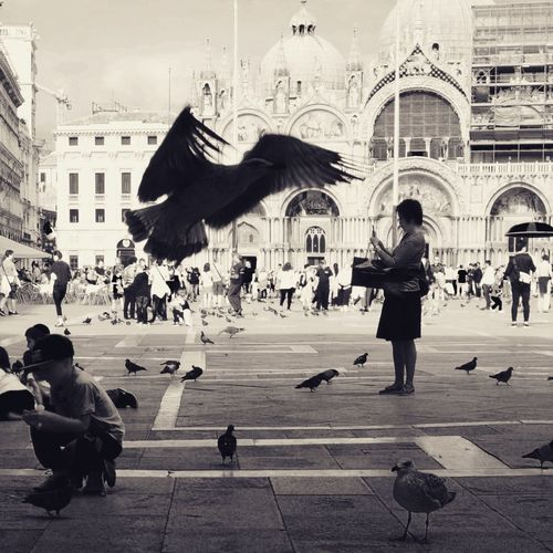 Hitchcock style... Venezia Bwphotography Black And White Photography Bnw Bnw_of_our_world Bw Blackandwhite Photography Bw_photooftheday Magnumphotos Bw Photography Bws_worldwide EyeEm AMPt_community Blackandwhite Bnw_planet Blackandwhitephotography Burnmagazine Lensculturestreets Bw_ Collection Bnw_life EyeEmNewHere Bw_shotz Bnw_magazine Bnw_worldwide Magazinestreet