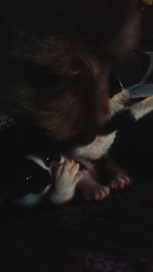Catslife Love For Orphaned Animals Kittens Crazy Cat Lady Animal Love My Dog <3 Cuddletime Petlover Hanging Out Mutts Are The Best