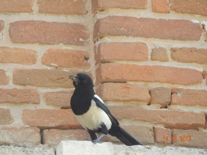 Animal Themes Birds🐦⛅ Birdwatching Close-up Naturelovers Relaxing Taking Photos Wildlife