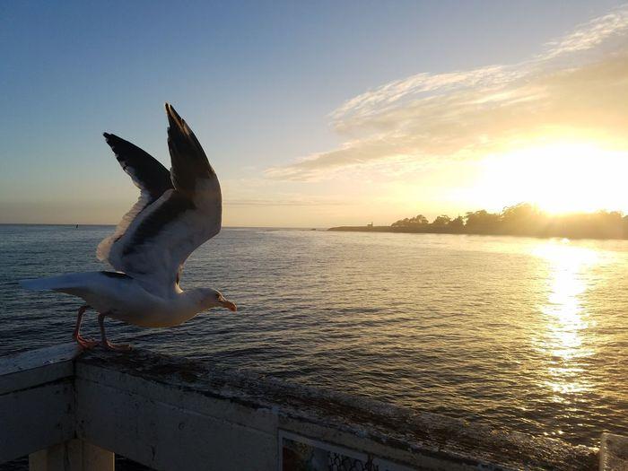 Sunset Sea Sky Beach Seagull Outdoors light and reflection Miles Away EyeEm Diversity