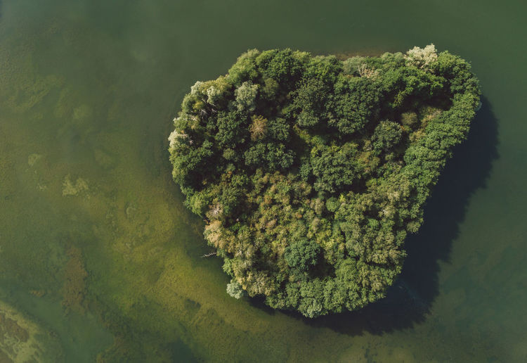 Aerial Shot Trees Aerial View Beauty In Nature Close-up Day Directly Above Food Forest Green Color Growth Heart Shape High Angle View Island Lake Leaf Nature No People Plant Tranquility Underwater View From Above Water Waterfront #NotYourCliche Love Letter 17.62°