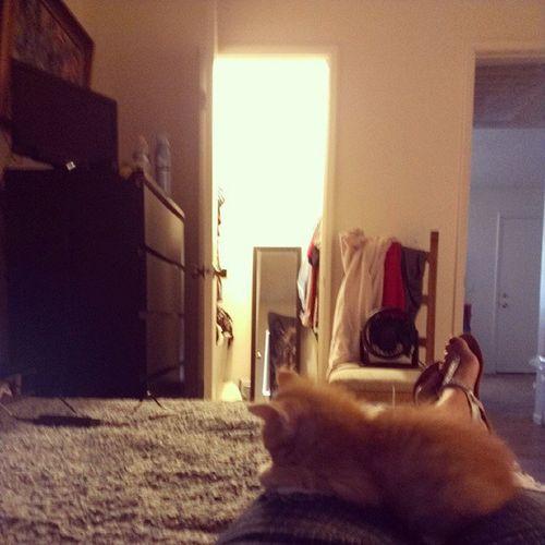 Relaxin Jengo Kitten Love