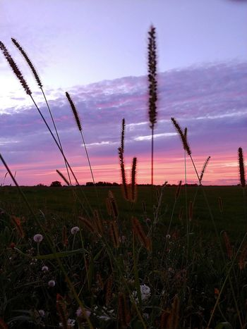 LG V30 Pretty In Pink Nature_collection Eye Em Best Shots The Color Purple Nature Sunset_collection Sunset Silhouettes Sunset Silhouette Sky Grass