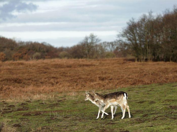 Buck Deer Animal Themes Animal Mammal Animals In The Wild Animal Wildlife Plant Landscape Nature Sky Outdoors