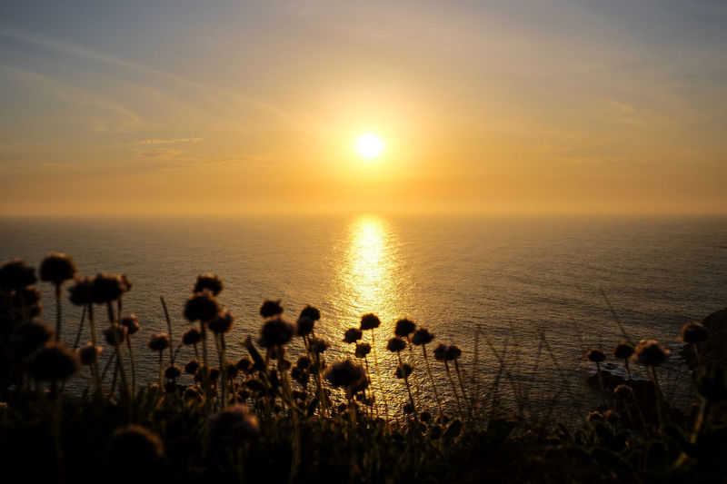 Beauty In Nature Cliff Day Galicia, Spain Horizon Over Water Nature No People Ocean Outdoors Scenics Sea Sea And Sky Silhouette Sky Sun Sunset Tranquil Scene Tranquility Water Wild Flowers The Great Outdoors - 2017 EyeEm Awards