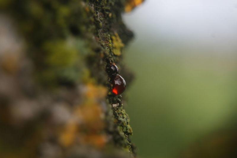 Pine Resin EyeEm Macro Nature_collection Macro