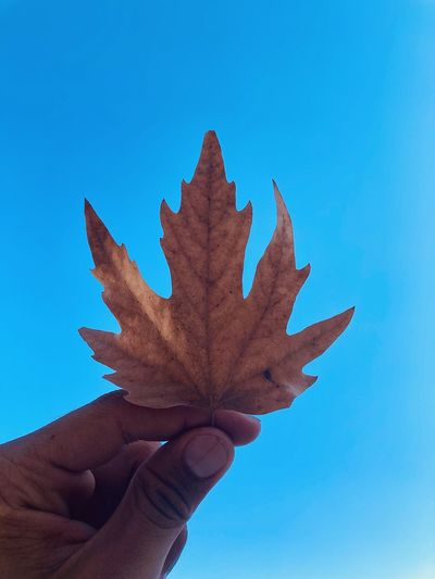 Close-up of hand holding maple leaf against blue sky