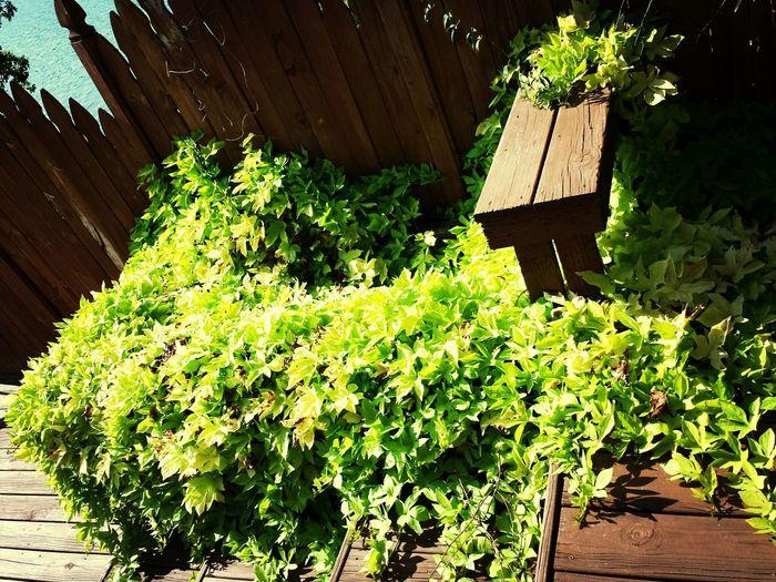 Relaxing Foliage Plant Flowers,Plants & Garden Greenplants